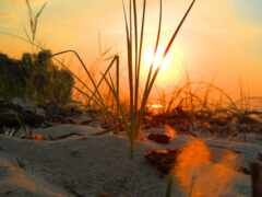 трава, рассвет