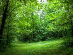 natural, растительность, wisconsin