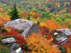 осень, лист, природа