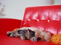 спят, собака, котенок