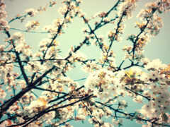 cvety, телефон, весна