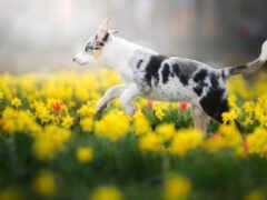 собака, весна, род