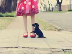 собака, девушка, щенок