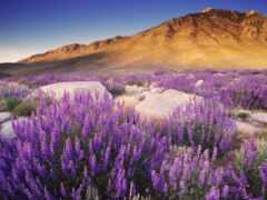 цветы, гора, природа