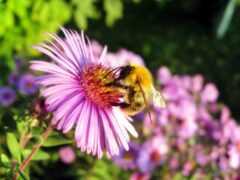 цветы, пчелка, первую