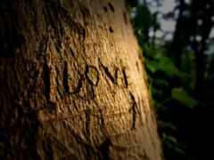 дерево, title, love