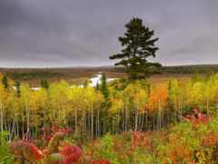 осень, лес, пасмурная