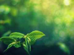 зелёный, картинка, боке