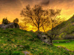 природа, закат, насилие