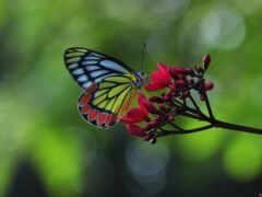 бабочка, окно, тема