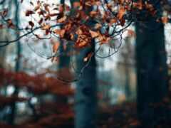 осень, лист, branch