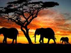 слон, каталог, цены