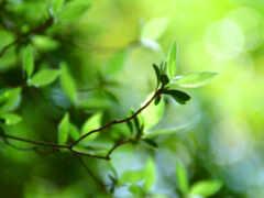 зеленое, листочек, лист