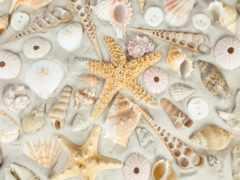 песок, seashells, пляж