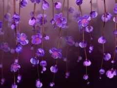 cvety, фиолетовые, тычинки