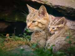 кот, animal, трава
