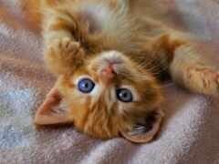кот, red, cute
