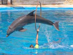 дельфинов, дельфины, дельфин