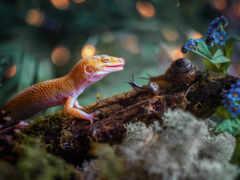 ящер, gecko, тег