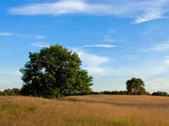 trees, рядом