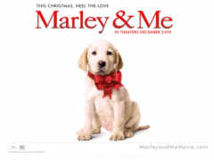 марли, marley, щенок