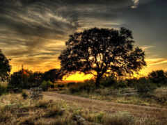 природа, планшетный, закат
