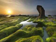 vodorosl, картинка, algue