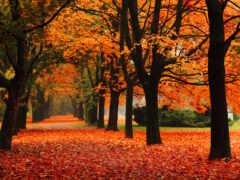 осень, пасть, листопад