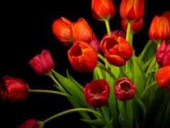 feliz, цветы, красивые