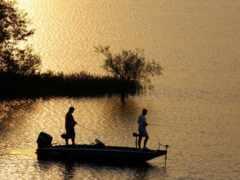 fish, лодка, bass
