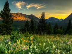 гора, есть, трава