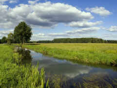 река, поле, elena