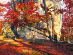 осень, дерево, лес