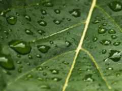 drop, leaf, wet