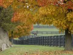 ферма, лошадиная, забор