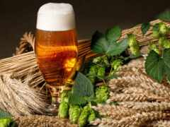 пиво, ячмень, варево