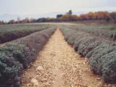 природа, filter, поле
