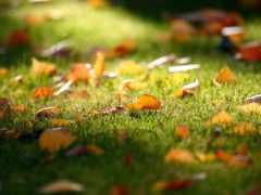 осень, золотая, красивые