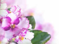 цветы, ангела, dnee