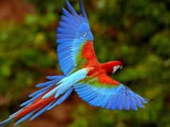 animali, попугаи, vertebrati