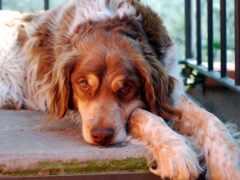 dogs, ремонт, ang
