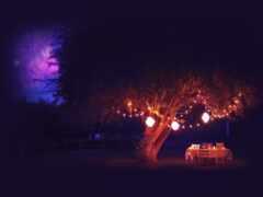 дерево, romantic, крымский