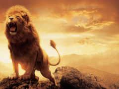 narnia, aslan, lion