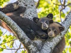 дерево, медведь, щука
