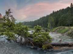oir, дерево, река