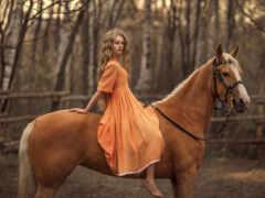 rus, гнедой, лошадь