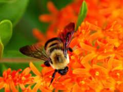 пчелы, flowers, пчелка