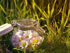 cvety, ромашки, банке