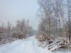 del, paisaje, invierno