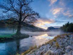 иней, trees, река